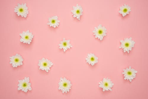 fakta macam macam warna pink, jenis jenis warna pink, Warna pink fanta, warna pink muda, warna pink salem, makna warna pink, macam-macam warna pink, arti warna pink dalam logo, arti warna pink dalam psikologi, warna pink tua, macam macam warna ungu, macam macam warna coklay, warna dusty pink, warna pink salem, macam-macam warna kuning, macam macam warna hijau, macam-macam warna merah, pink warna, macam macam warna pink jilbab, warna macam macam pink, macam warna pink dan namanya, macam macam warna pink jilbab, psikologi warna pink, filosofi warna pink, makna warna pink, warna pink dalam logo, sejarah warna pink, pengertian warna pink, kode warna pink, aneka macam warna pink, warna merah muda, macam warna merah muda, macam macam warna merah muda